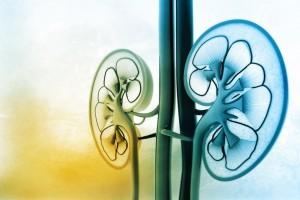 Gravura dos rins | Diagnóstico precoce do tumor renal e as chances de cura